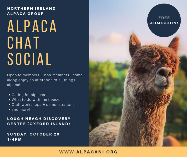 Alpaca Chat Social